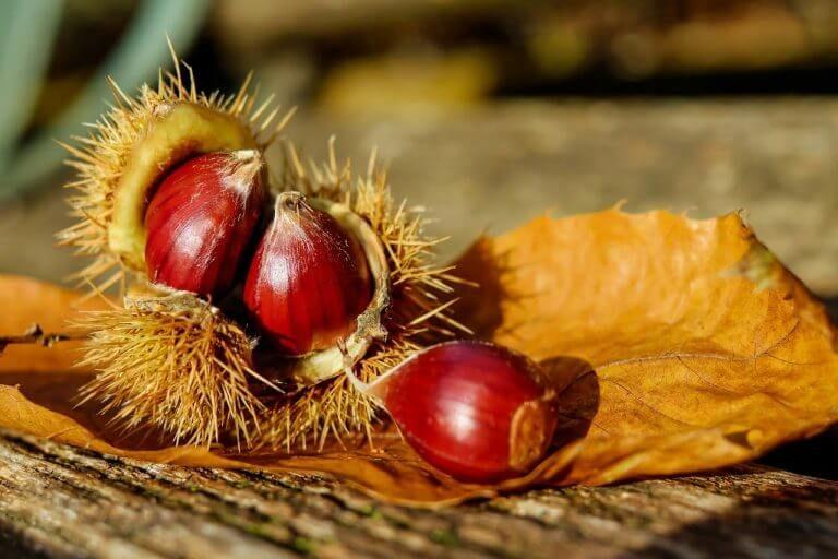 Naturgaben Edelkastanien-Rohkostpulver und Maroni-Mehl kaufen